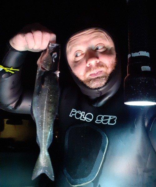 Sej fanget af Jesper Nordin ved Øresund