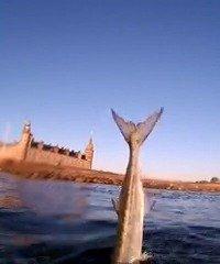 Ingen hornfisk –  fanget af Morten Rosenvold Villadsen ved Kronborg om dagen