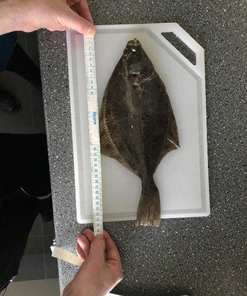 Første fangst – Skrubbe fanget af jom43 ved Polderev Grenå Strand om dagen