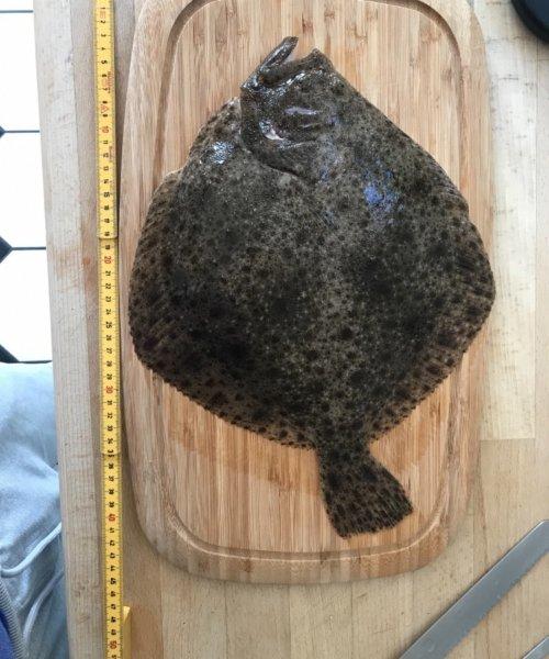 Middagsmad – Pighvar fanget af topskudt ved Køge bugt om dagen