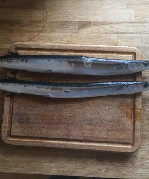 Gode horn – Hornfisk fanget af SuneRahbek ved Glatved om dagen