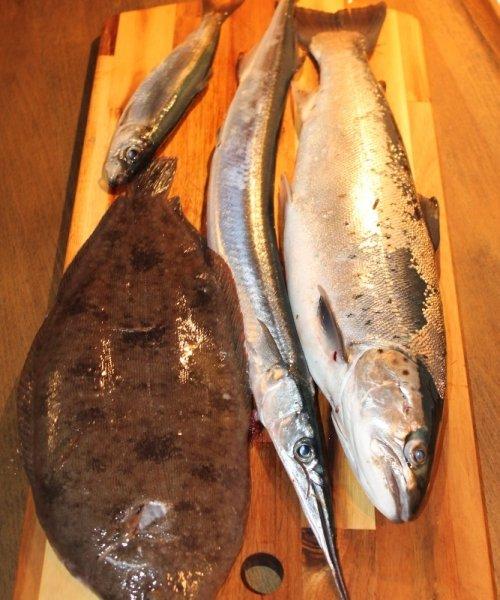 Hornfisk fanget af Øster ved Hornbæk Plantage om natten