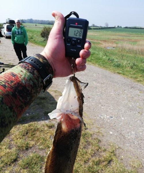 Pighvar fanget af Dani459e ved Langeland  om dagen