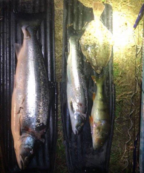 🤩👍 – Havørred fanget af fiskerphilip ved Væggerløse  om natten