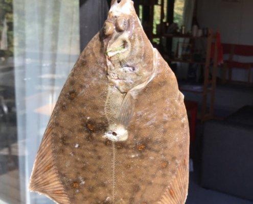 fanget af fiskerphilip