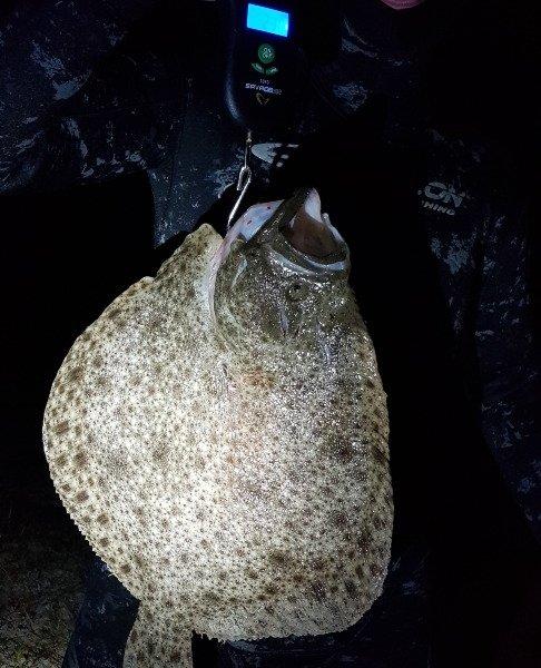 Første Pighvar – Pighvar fanget af JLC73 ved Djursland