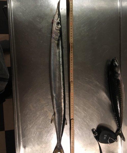 Håndefanget – Hornfisk fanget af HansRolfG ved Langeland