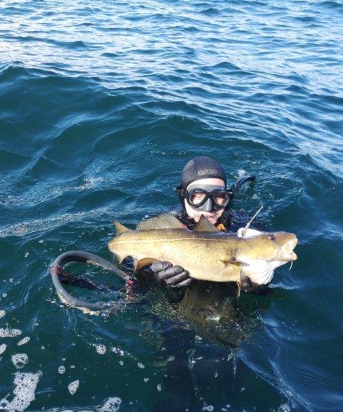 Vrag torsk – Torsk fanget af Christiansloth ved Samsø