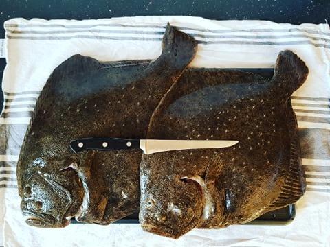 Kold sol – Pighvar fanget af jesper-devantier ved Tisvilde