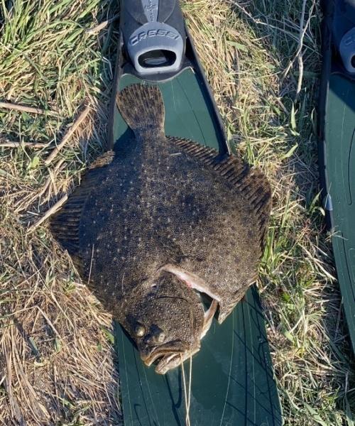 Rigtig fed – Pighvar fanget af rasmusliesk ved Køge bugt