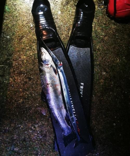 Sjov oplevelse – Hornfisk fanget af samuel-bering ved sydvestfyn