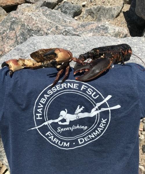 Hummer fanget af MK.Havbasserne ved Limfjorden
