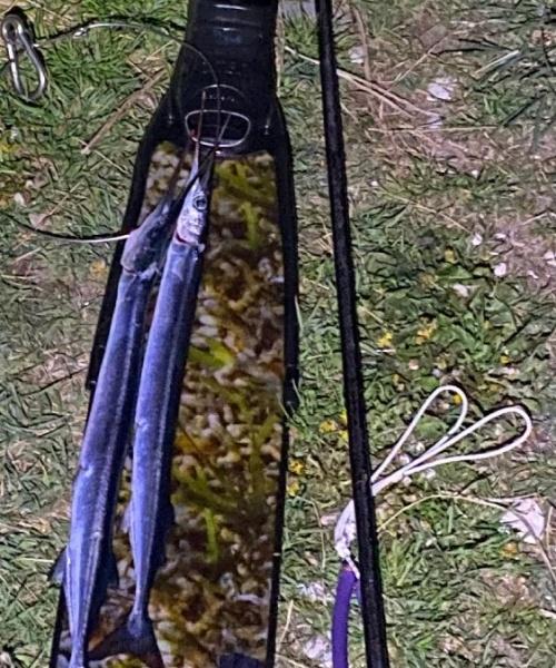Overvejdede-et-øjeblik-om loopet-var-for-lille – Hornfisk fanget af frankgellert ved Isefjorden