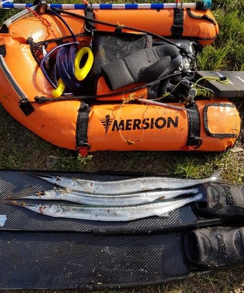 Store mængder – Hornfisk fanget af Tom ivø ved Sydsjælland
