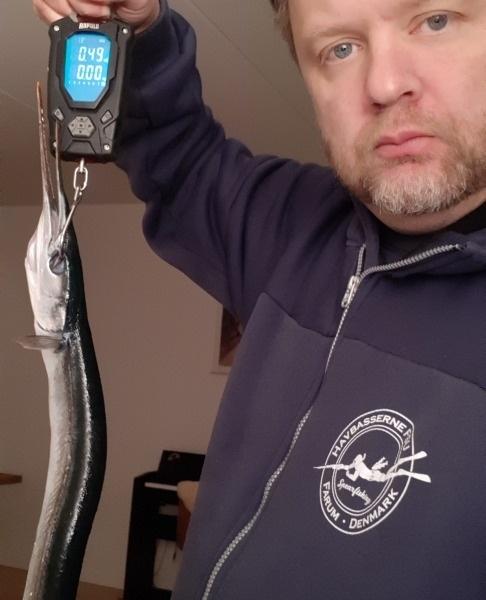 Fin aften – Hornfisk fanget af Jesper Nordin ved Glatved