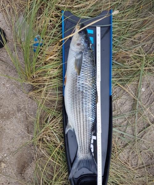 1 fisk – Multe fanget af Tom ivø ved Vesterhavet