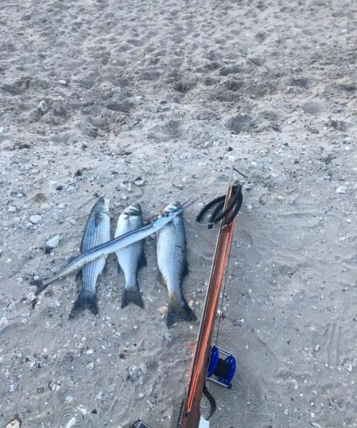 Hornfisk fanget af Tonny jensen ved Hanstholm