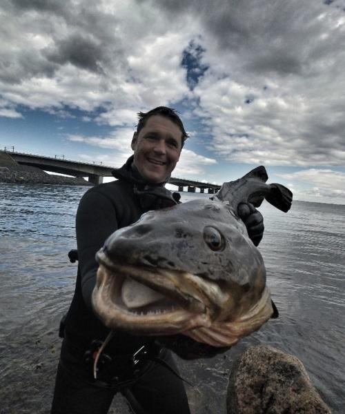 Bedste kystspot – Torsk fanget af Morten Rosenvold Villadsen ved Nyborg