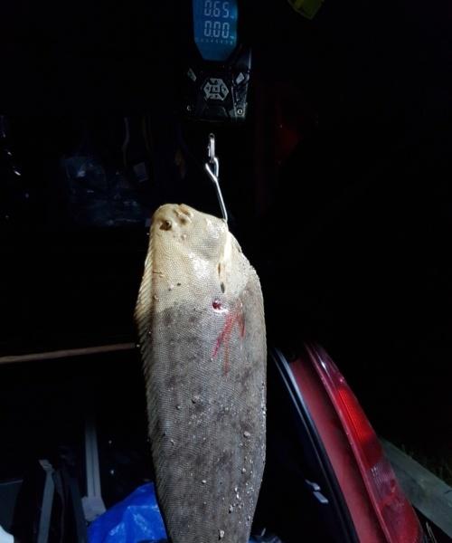 Kun stringer – Tunge fanget af Tom ivø ved Sjælland