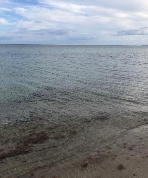 Sælhunden Ribe – Rødspætte fanget af lars-christensen ved Als