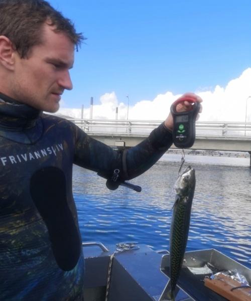 Makrel fanget af MK.Havbasserne ved Sjælland