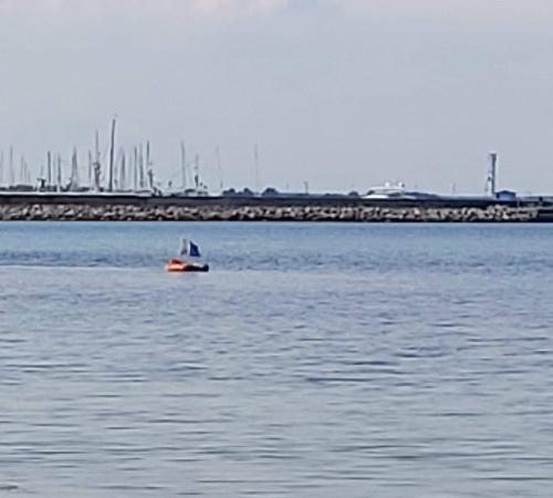 Sælhunden Ribe – Torsk fanget af lars-christensen ved Østerby