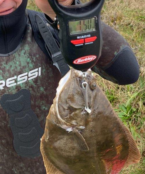 Koldtvand – Skrubbe fanget af nicolaikjaer ved Sydfyn