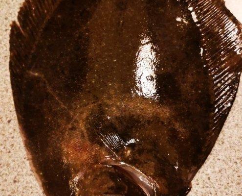 Kort tur – Slethvarre fanget af carsten-mauritzen ved Strandmøllekroen