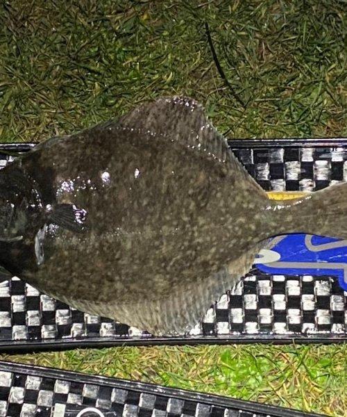 Få koldefisk – Skrubbe fanget af frankgellert ved Sj. Odde