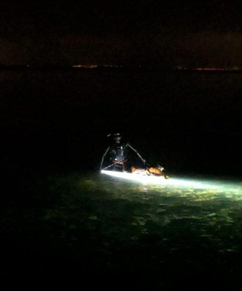 To torsk – Torsk fanget af frankgellert ved Øresund