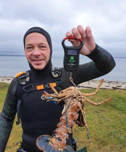 25 hummer – Hummer fanget af Peter Olsen ved Limfjorden