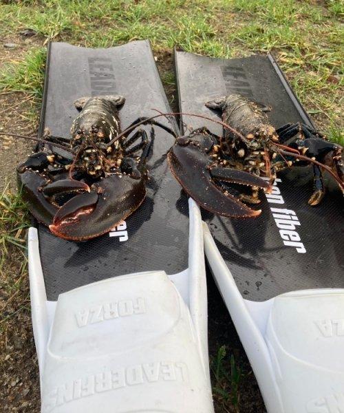 Super tur – Hummer fanget af nicolaikjaer ved Limfjorden