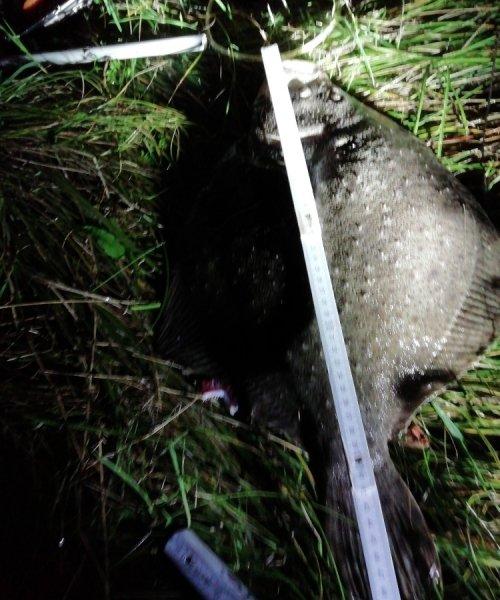God sigt – Pighvar fanget af Tom ved Nordkysten
