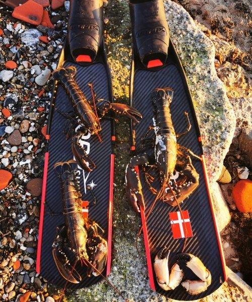 🥶🦞 – Hummer fanget af timur-gundal ved Limfjorden