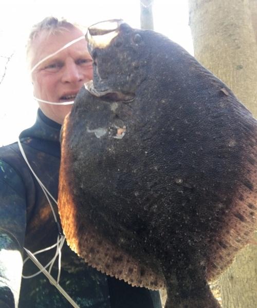Fed oplevelse – Pighvar fanget af knud-munk ved Sydfyn