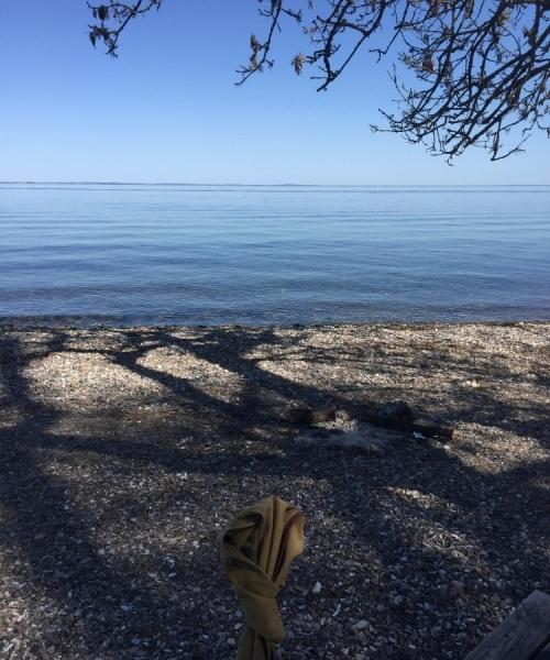 Torsk fanget af gejlesben ved Øresund