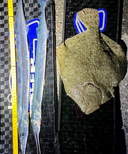 Hundredvisflade oglidtHorn – Hornfisk fanget af frankgellert ved Nordsjælland
