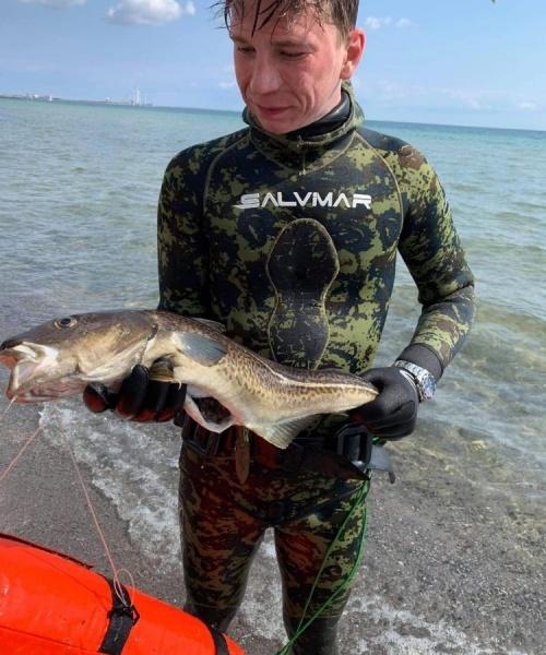 Første torsk – Torsk fanget af JuliusFriis ved Køge bugt