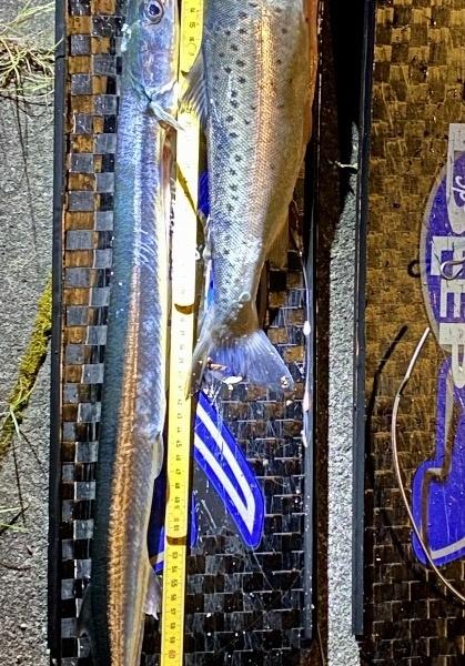 Blodmåne ogStjerneskud2 – Hornfisk fanget af frankgellert ved Sejerøbugt
