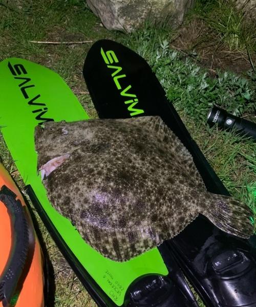 Flot pighvar – Pighvar fanget af runehven ved Nordkysten