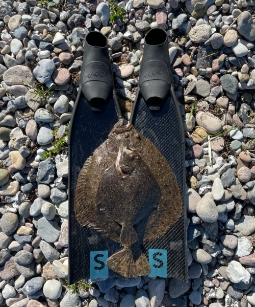 Pointjagt Jylland – Pighvar fanget af KlausSimonsen ved Langeland