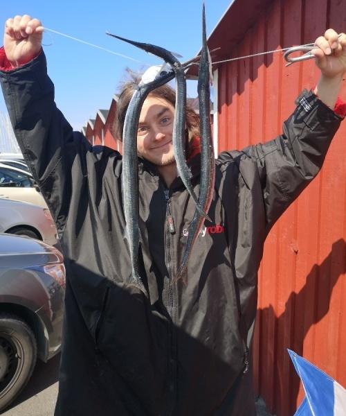 Bøh – Hornfisk fanget af BirdHellmannChristofferChristoffer ved Sjælland