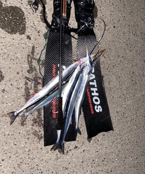 Hornfisk fanget af søren ebdrup ved Odden
