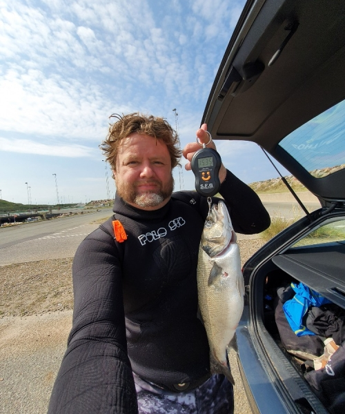 Fantastisk dyk – Havbars fanget af Jesper Nordin ved Hanstholm