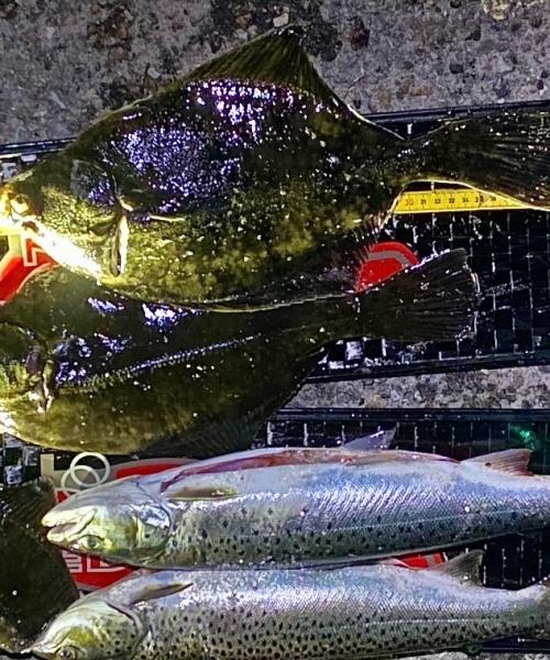 Skrubbe-fjæsingesafari – Skrubbe fanget af frankgellert ved Nordsjælland