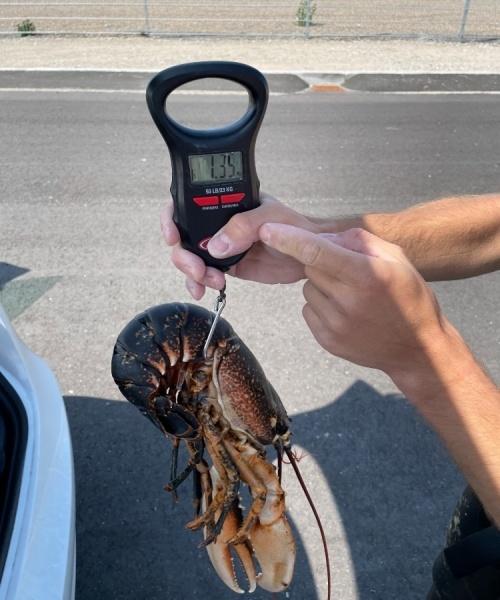 Lækker – Hummer fanget af frederik-markussen ved Skagen