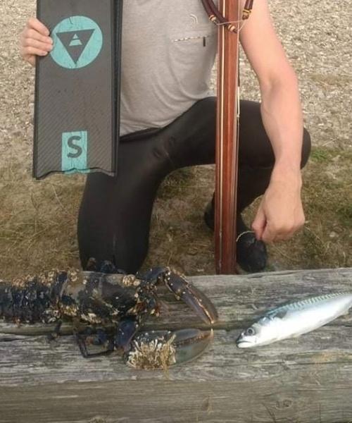 Makrel fanget af KlausSimonsen ved Nordjylland