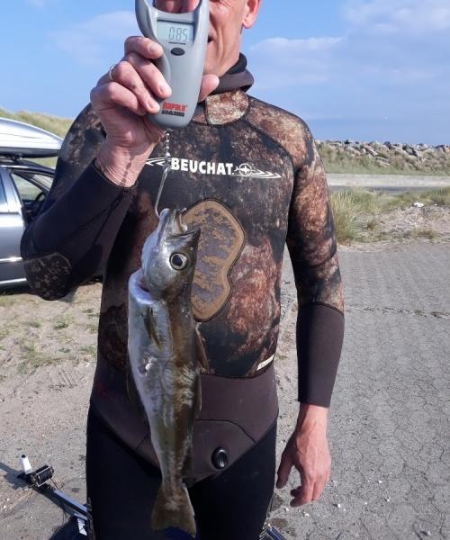 Lubbe fanget af Kenneth Lund Hansen ved Vesterhavet