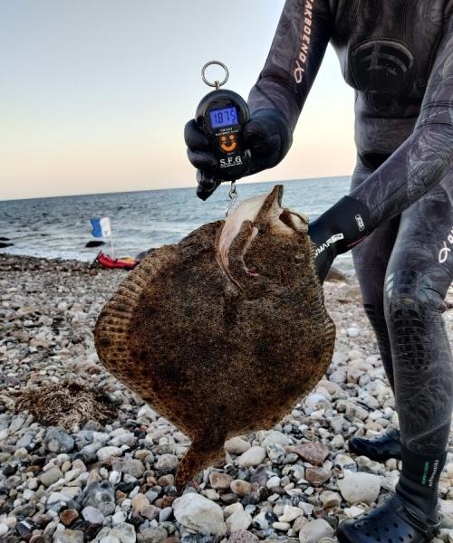 Gensyn? – Pighvar fanget af Laura ved Røsnæs