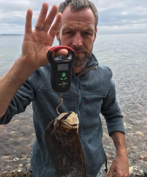 Pighvar fanget af brian-pedersen ved Sydfyn